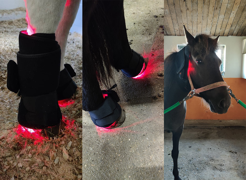 Horse Light Therapy Pads